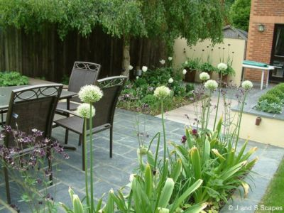 2-alliums-in-full-glory-j-and-s-scapes
